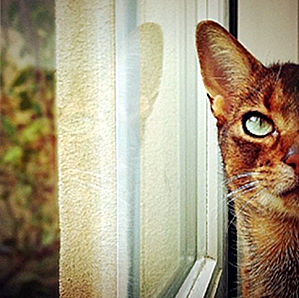 25 Surprisingly Awesome Instagram Photographies